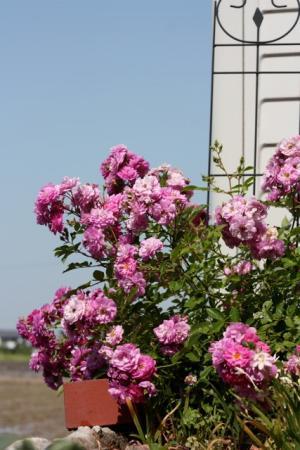 ナチュラルな自然素材の木の家のバルコニーのピンクの鉢植え